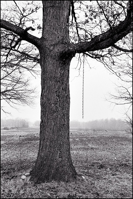 A tree with a chain hanging from one of its branches stands on the edge of a field on a foggy morning in Fort Wayne, Indiana.