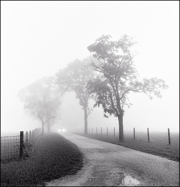 Headlights emerge from heavy fog on a gravel road lined with trees.