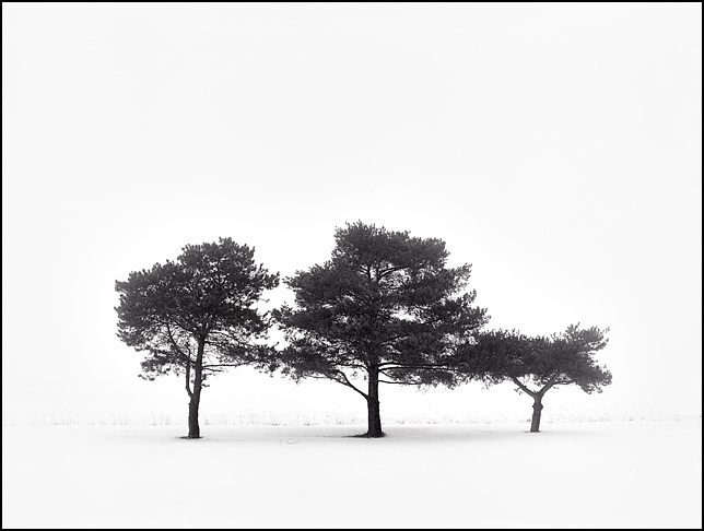 Three trees huddle together on the edge of a field in the snow on a foggy February day along Hoagland Road in rural southeast Allen County, Indiana. Landscape photo of a winter fog scene.